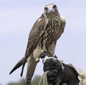 Jäger- und Falknerprüfung